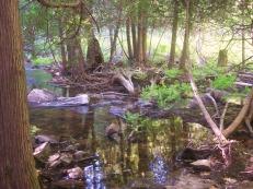 wetlands-3